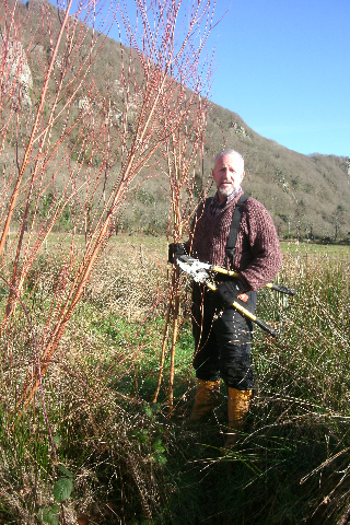 Cutting Red Willow