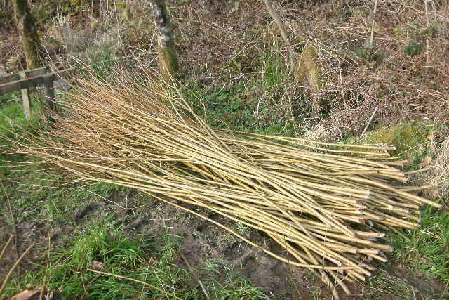 Cut Willow Lengths