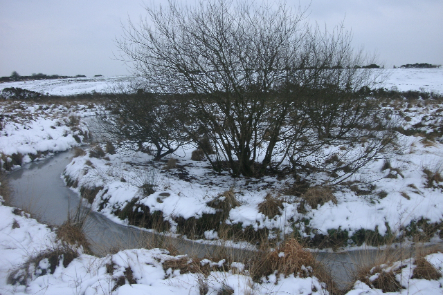 Cae Non in Snow 09