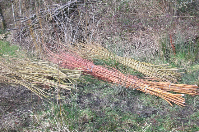 Different Coloured Willow Lengths
